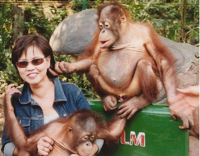 Pembangan taman zona pertama baby zoo di taman safari indonesia II prigen