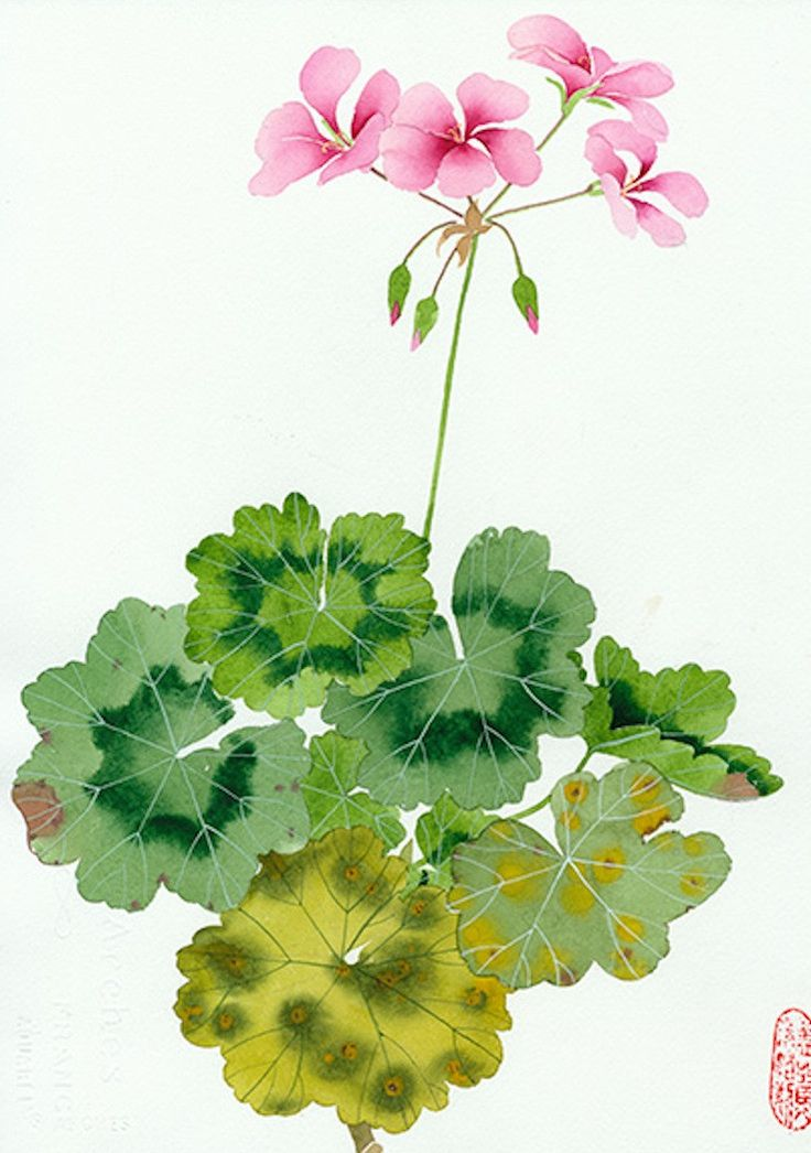 20 Botanical Tattoo Artists You Need To Follow For Your: Geranium II By Gabby MALPAS
