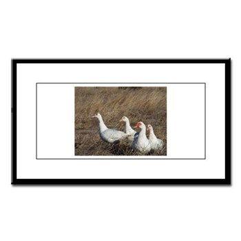 Three Hens And A Drake Small Framed Print