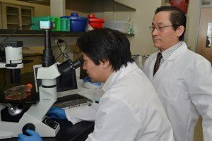 Embryonic stem cells offer new treatment for multiple sclerosis #chronicpain