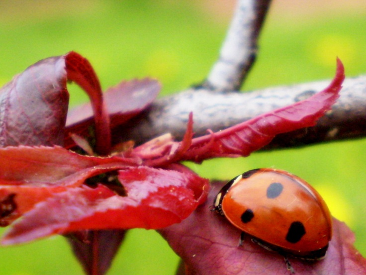 Taken by Derek Wasson-Lady Bug