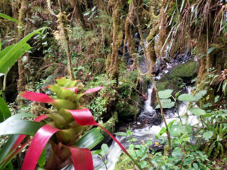 El Interior del bosque de las siete cascadas. La Calera - Colombia.