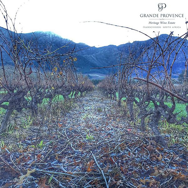 A frosty morning in Franschhoek! It is winter and the vines get a well deserved rest.
