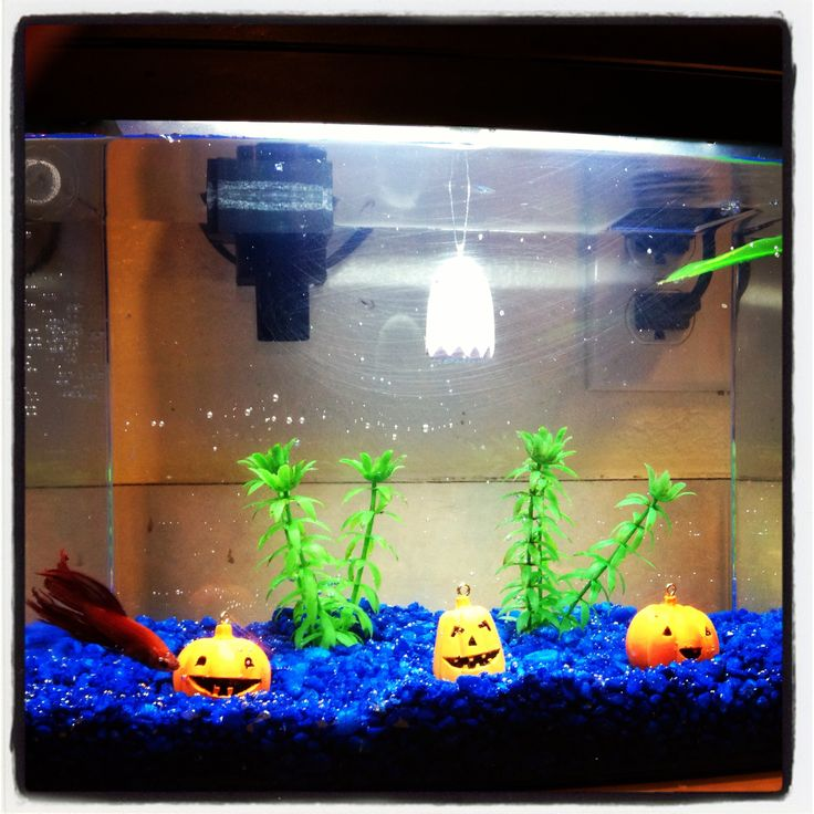 halloween fish tank decorations halloween fish tank