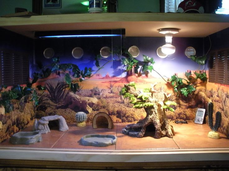 Bearded dragon enclosure