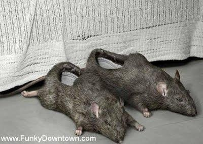 Who doesn't want rat slippers? Now I think I've seen it all.: Rats Shoes, Rats Slippers, Crazy Shoes, Funny Pictures, Shoes Design, Strange Shoes, Weird Stuff, Weird Shoes, New Shoes