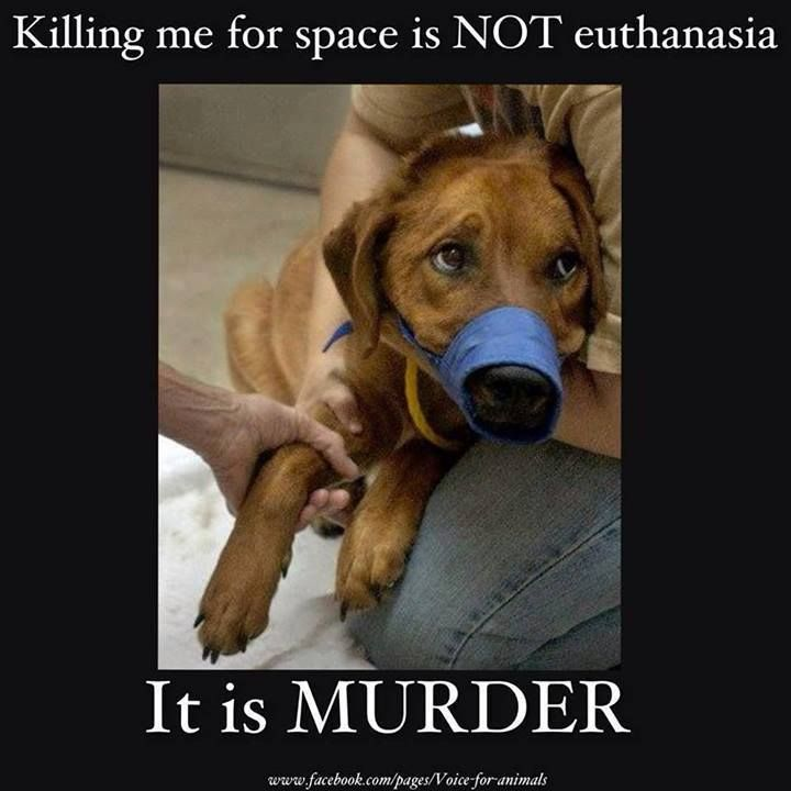 The Angel's Army United's photo - Killing me for space is NOT euthanasia. It is MURDER. ADOPT, PLEASE DON'T BUY. Spread the message!