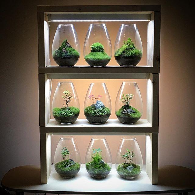 【mosslight1955】さんのInstagramをピンしています。 《#モスライト#mosslight#コケ#moss#terrarium #テラリウム#interiorgreen#indoorgreen#plants#観葉植物#苔#インテリア#こけ#苔テラリウム#mossterrarium#苔盆栽##mossarium#照明器具#lightingfixture》