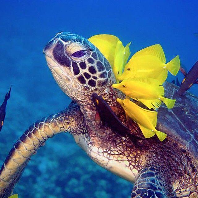 """""""#дайвинг #дайв #погружение #подводой #подводныймир #дайвингидругоймир #вода #интересное #факты #красота #море #океан #дайвер #отдых #позитив #diving #diver #underwater #dive #divingandotherworld #ocean #sea #scubadiving #акваланг #scuba"""" Photo taken by @divingandotherworld on Instagram, pinned via the InstaPin iOS App! http://www.instapinapp.com (09/15/2015)"""