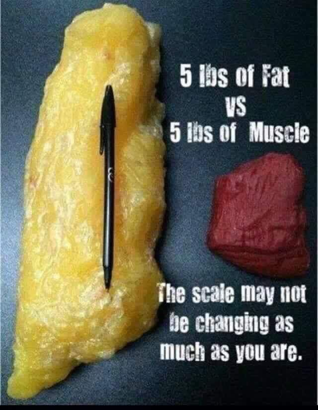 Fat and muscle weigh the same!! 5lbs is 5lbs. BUT.....fat takes up more room. The scale may not be moving but you may still be changing. Don't get caught up on numbers, go by how you feel. Love my Plexus Slim cause it burns fat not muscle!! #fat #vs #muscle #whyiplexus