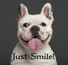 Funny Quotes Handsome Dog