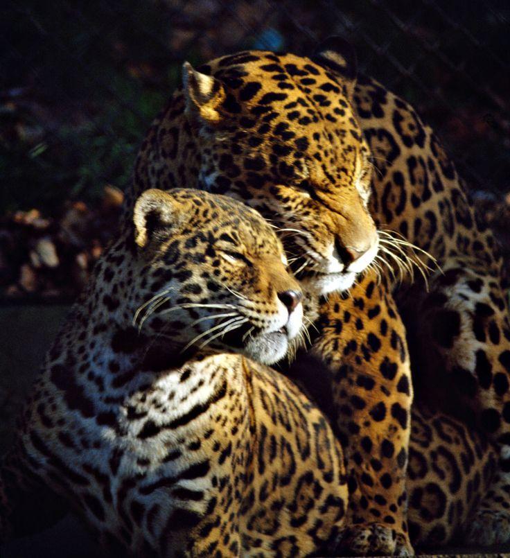 Детки вне клетки: 12 лучших зоопарков мира