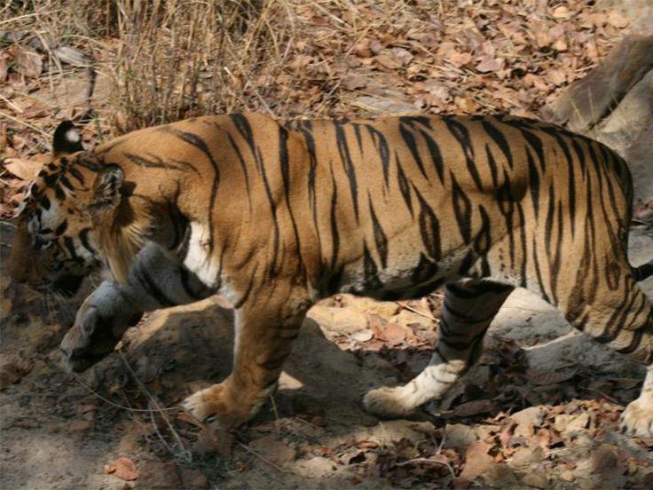 Sunabeda Wildlife Sanctuary - in Odisha, India
