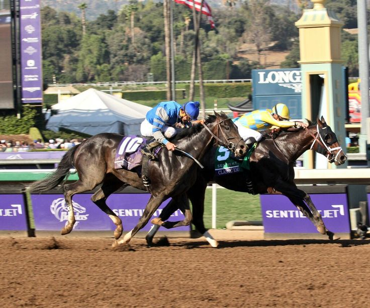 Classic Empire beats Not This Time in the Breeders' Cup Juvenile.  2016. Classic Empire is half-brother to American Pharoah through their sire Pioneer of the Nile.
