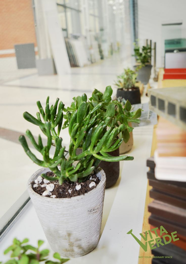 Here's an idea how to incorporate art into your office space and break the monotony - we call them green sculptures! ;)  #officeplants