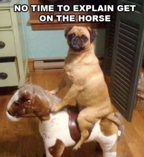 Dog on a horse!