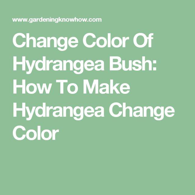 17 Best Ideas About Hydrangea Colors On Pinterest