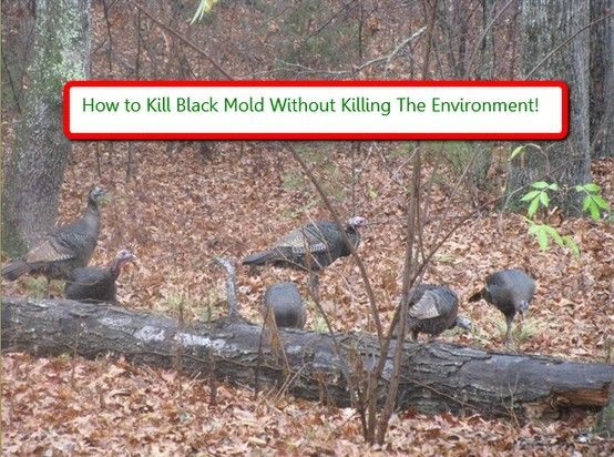 how to clean and kill mold