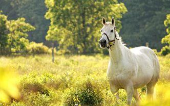 Horse Wallpaper Desktop Background (23)
