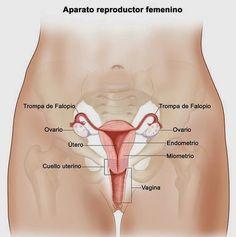 Señales tempranas de cáncer de ovario que no debes ingnorar | ConSalud.info