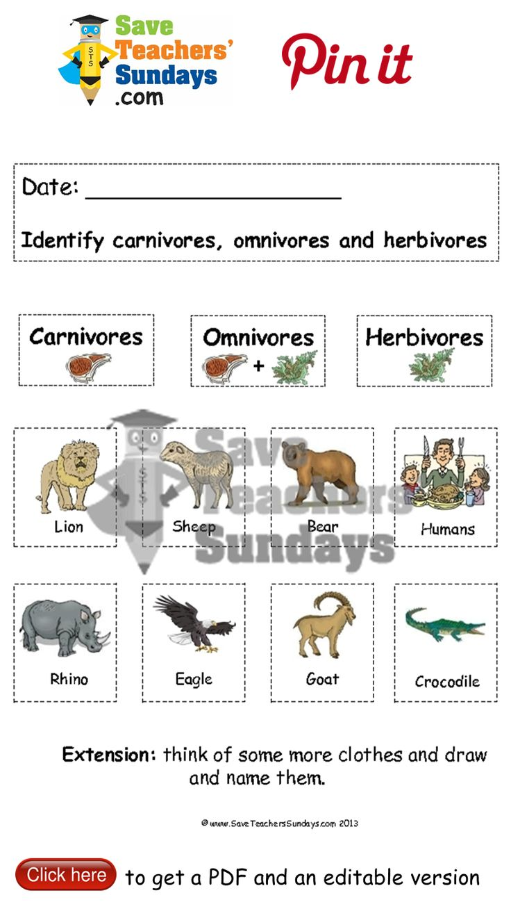 Carnivores, omnivores and herbivores animals to sort. Go to http://www.saveteacherssundays.com/science/year-1/381/lesson-8-carnivores-omnivores-and-herbivores/ to download this Carnivores, omnivores and herbivores animals to sort. #SaveTeachersSundaysUK