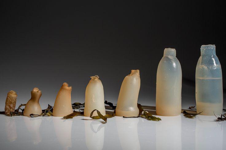 Biodegradable algae water bottles provide a green alternative to plastic