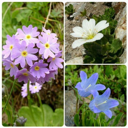 Beauties )) #elbrus #kabardinobalkaria #flowers