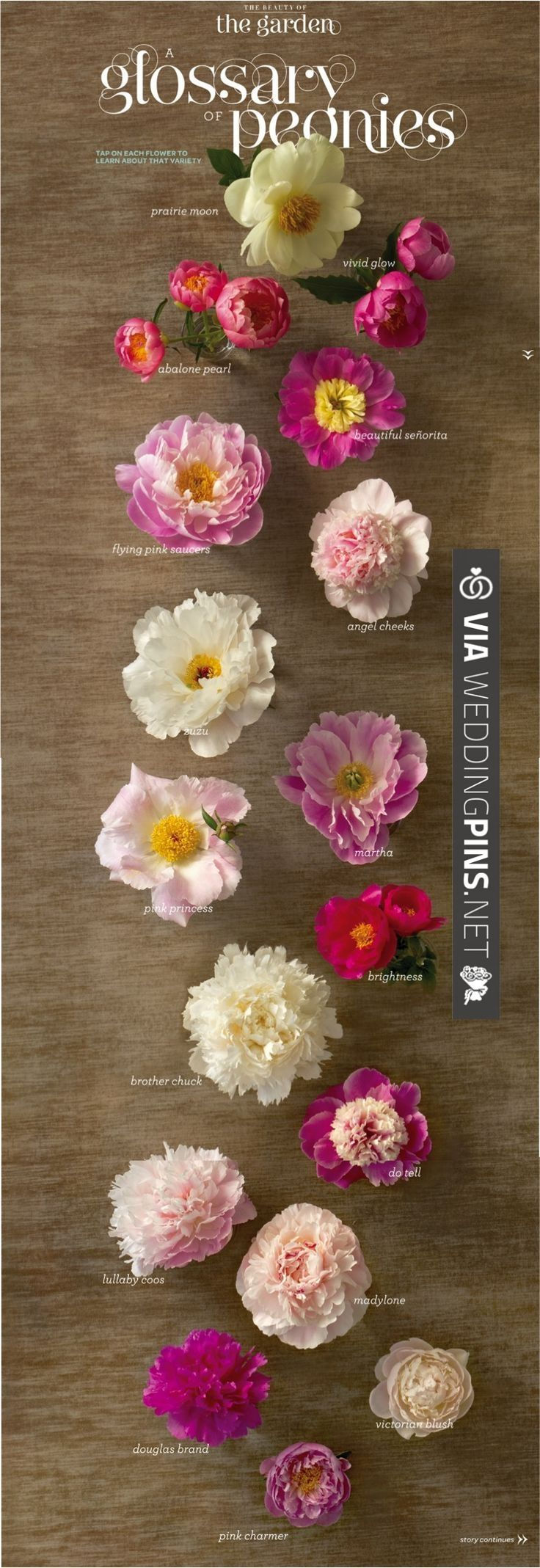 The definitive guide to peonies | I want them all