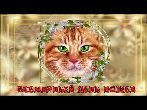 1 Марта ДЕНЬ КОШЕК  Веселые Кошки
