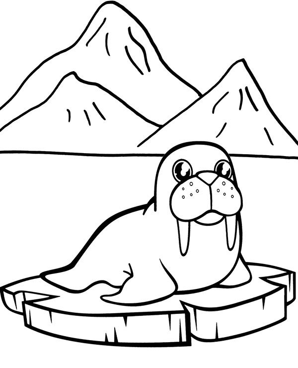 Walrus easy coloring page to print for free, fish Coloring