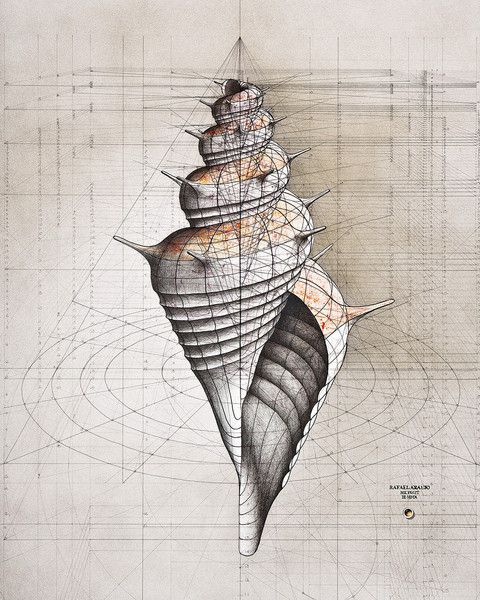 """Rafael Araujo – The Colossal Shop.. At a technology-free drafting table he deftly renders the motion and subtle mathematical brilliance of nature with a pencil, ruler and protractor."""" Araujo creates an imagined mathematical framework of three dimensional space where butterflies take flight and the logarithmic spirals of shells swirl into existence.."""""""