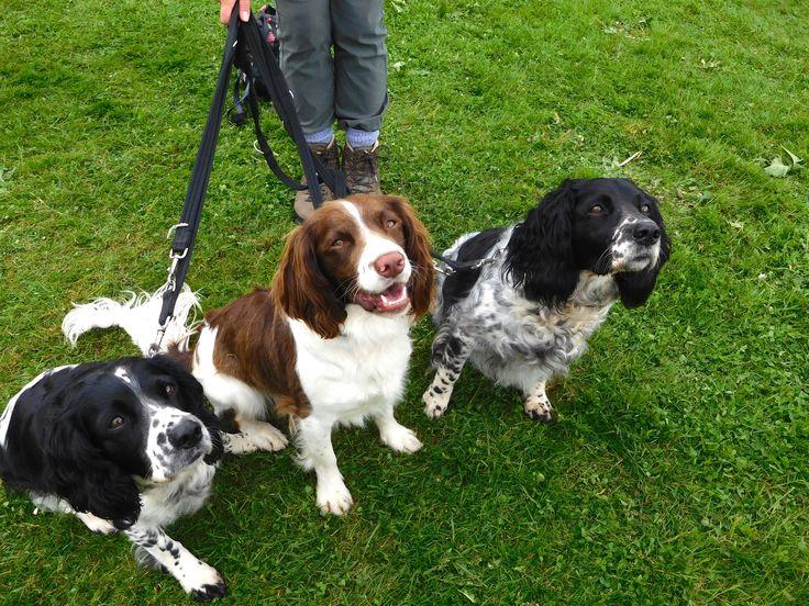 #BushcraftShow #Dogs