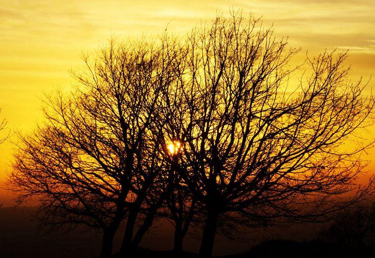 sunset on tree by lozio