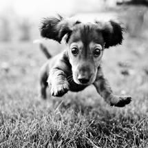 @Rachel Lester  She should have a dachsund ;) because dachsunds are amazing. But it's your book so ya know :)