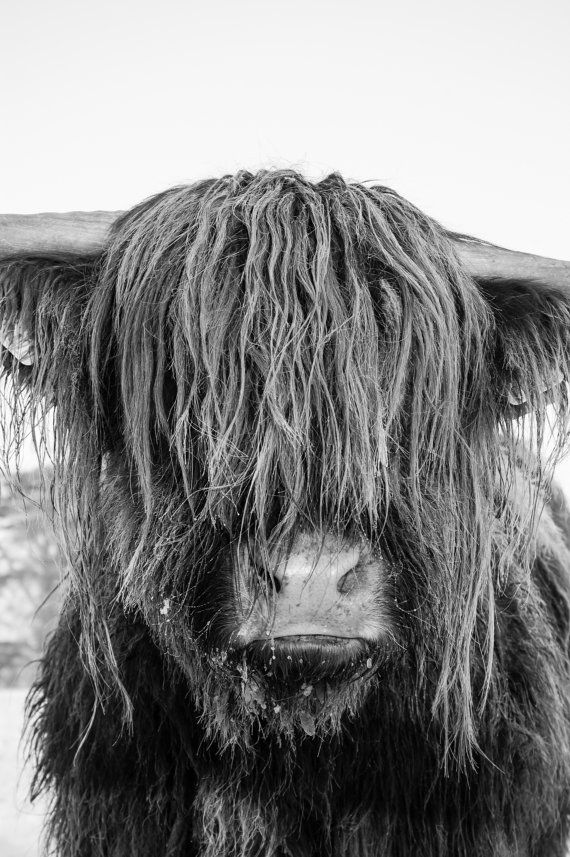 Highland Rinder 23 – Fine Art Fotografie – Highland Kuh – Naturfotografie