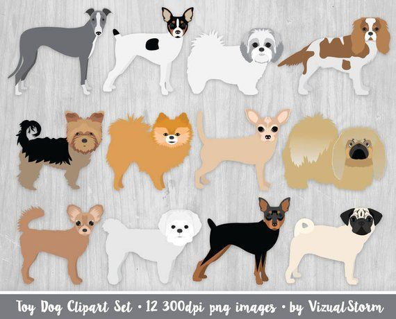 Toy Dog Breeds Clipart King Charles Chihuahua Pomeranian