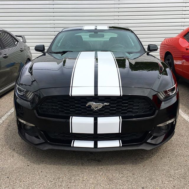 White On Black Stripes Mustang Gt Wrap Gt350 Gt500 Shelby