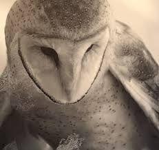 owl painting joshua yeldham - Google Search
