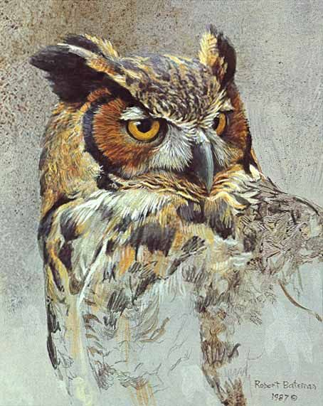 watercolor owl images | Wildlife art prints plus original paintings with a wide selection from ...