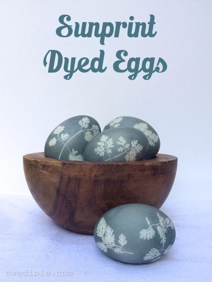 Sunprint-Dyed-Eggs77