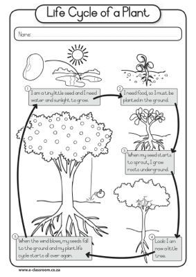 Worksheet - Plant Life Cycle: | Preschool Projects | Plant science ...