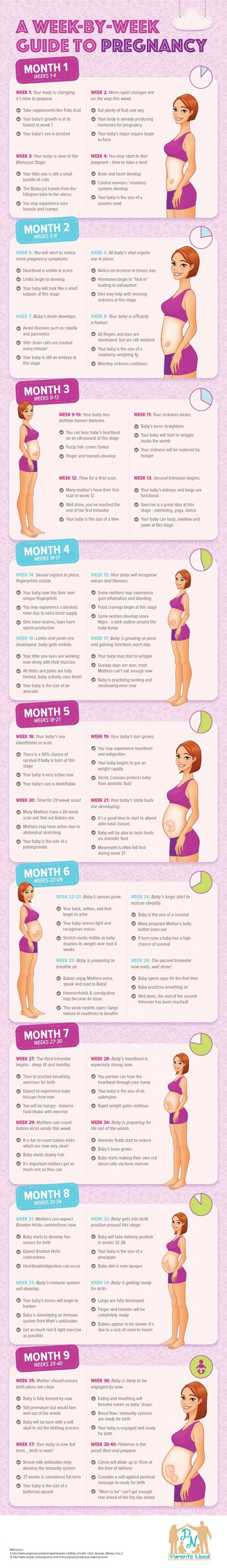 Guide to Pregnancy Week by Week Infographic