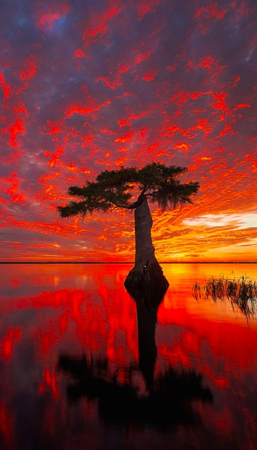 Blue Cypress Conservation Area ~ Florida