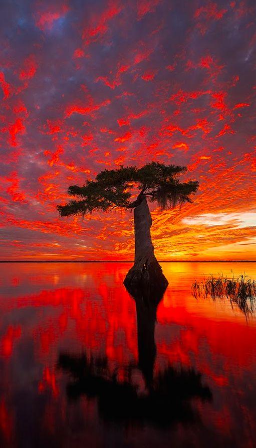 Fiery sunrise over Blue Cypress Lake on the Treasure Coast of Florida by Paul Marcellini