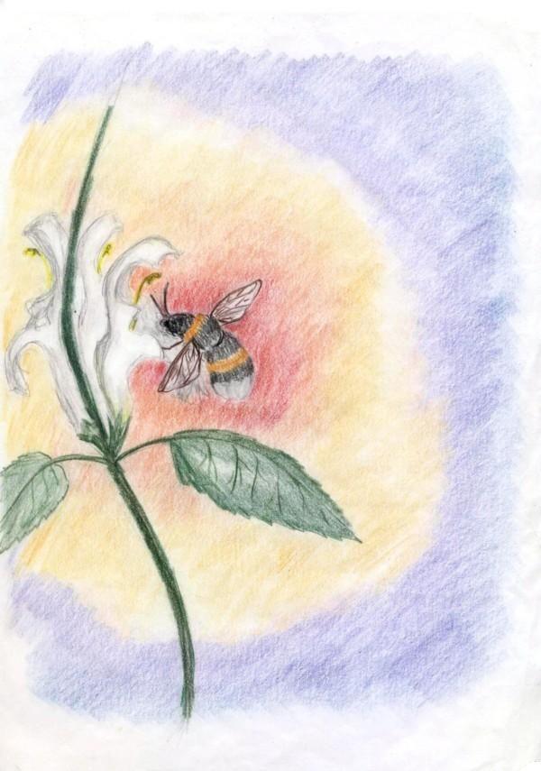 Waldorf ~ 5th grade ~ Botany ~ Bee ~ main lesson book