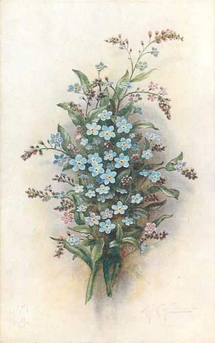 sprays of  blue & purple forget-me nots, two stems to bottom