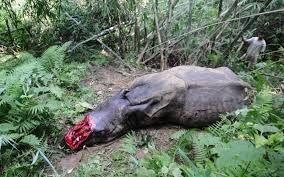 http://www.avaaz.org/es/petition/Ministerio_de_Agricultura_Alimentacion_y_Medio_Ambiente_Detengan_la_matanza_de_rinocerontes_en_la_provincia_oriental_del/?nvBZScb