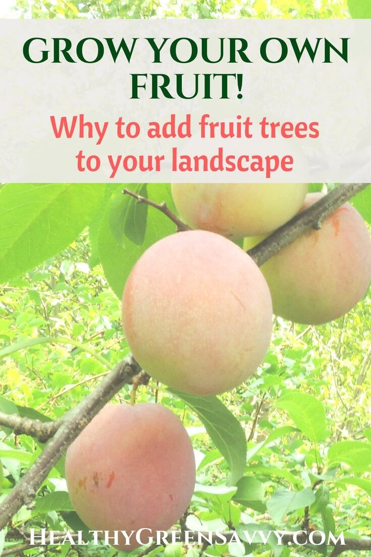 Growing your own fruit is easier than you think! Are you missing out on free food from your yard? Here's why you should make your next tree a fruit-bearing one. | grow food | permaculture | growing fruit |