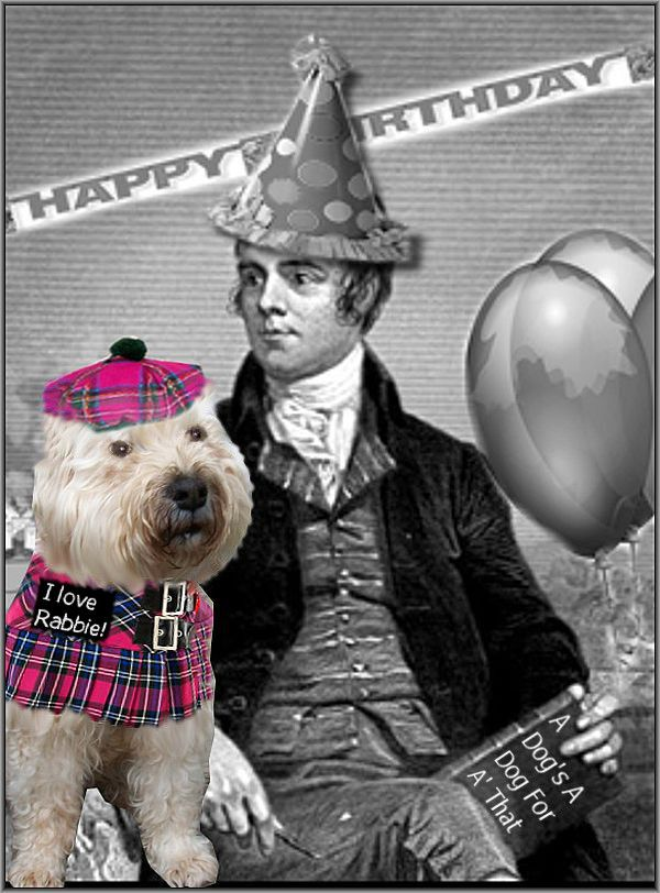 Robbie Burns Day with my dog Tali, the Wheaten Terrier.