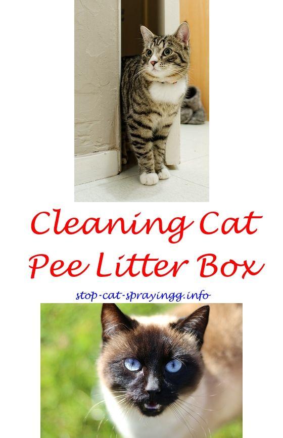 Carpet Cleaning Cat Urine Odor Carpet Vidalondon